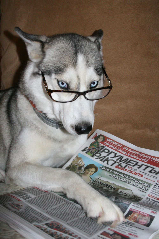 Участник №1. Эля, хаски. Знаток биржевых маркеров и политических рокировок. Свежие новости предпочитает получать из надёжного источника - из газеты, проверенной временем. Не верит в гороскопы.