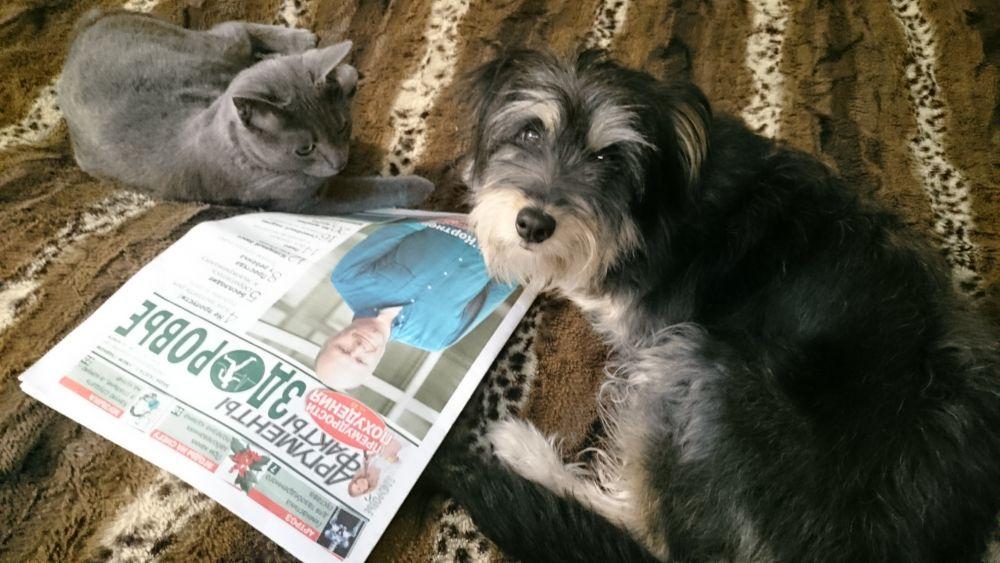 Участник №5. Тоби. Вместе со своим другом, котом Марсом, внимательно изучают «АиФ-Здоровье». Кому же ещё следить за самочувствием хозяев?!