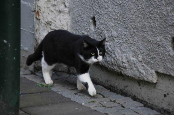 Очень целеустремленный кот.