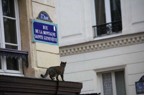 В Париже главное - уметь читать.