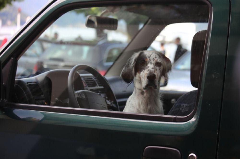 Куда едем?