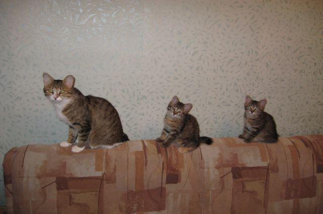 Участник конкурса  - Бася с котятами