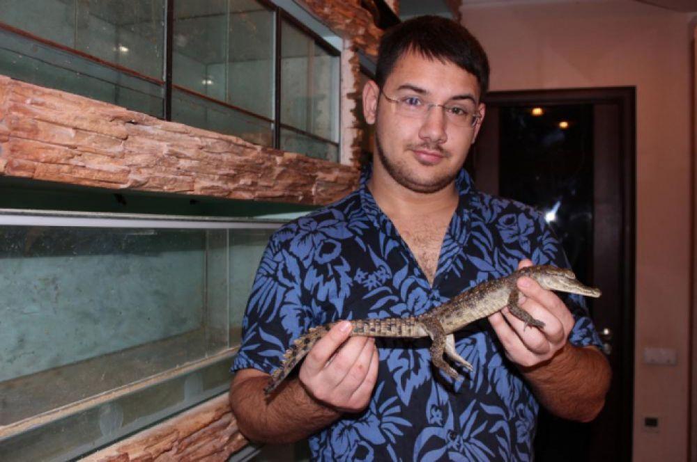 Полученные яйца ростовский крокодиловод инкубирует. Совсем маленьких крокодилов Даниил перевозит в Ростов-на-Дону и досматривает у себя дома.