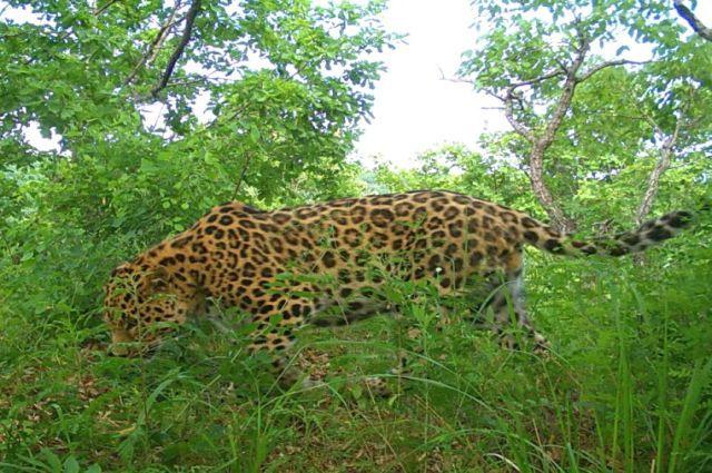 Цель акции - рассказать о редких видах животных, которые обитают на территории России.