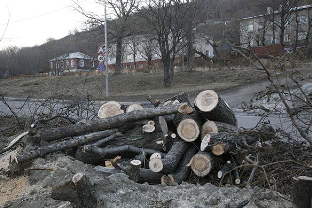 Деревьев вдоль дороги больше нет...