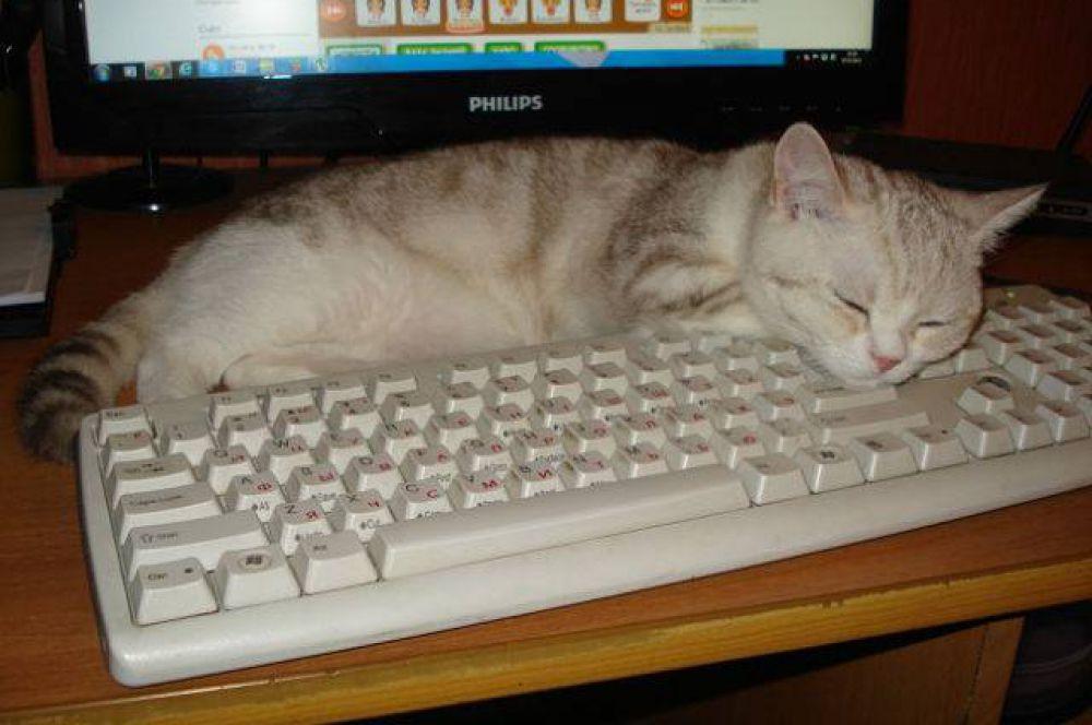 Рафаэль, по словам его хозяйки Елены Бондаренко, тянется к знаниям - по крайней мере, обожает спать у компьютера.