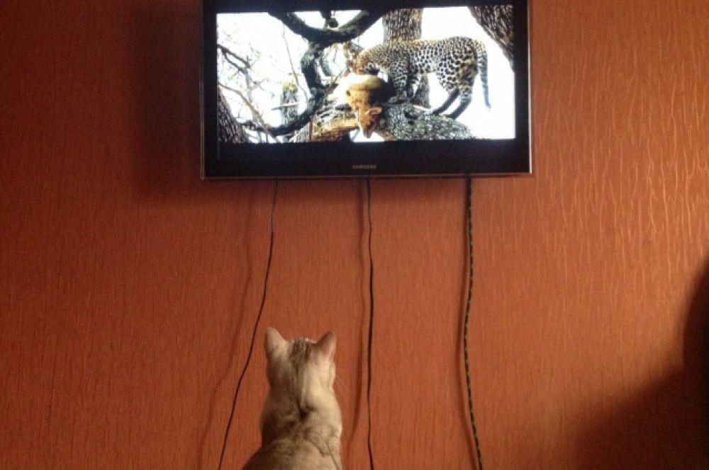 И, конечно, Рафаэль очень любит наблюдать за старшими товарищами.