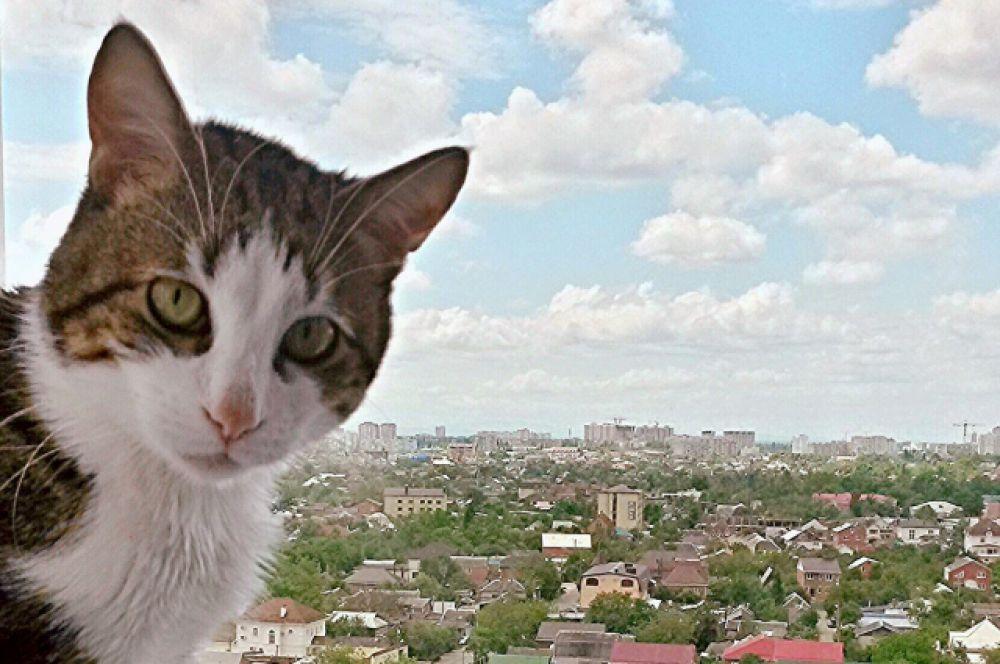 Кот Тихон Полины Лопановой не боится высоты.
