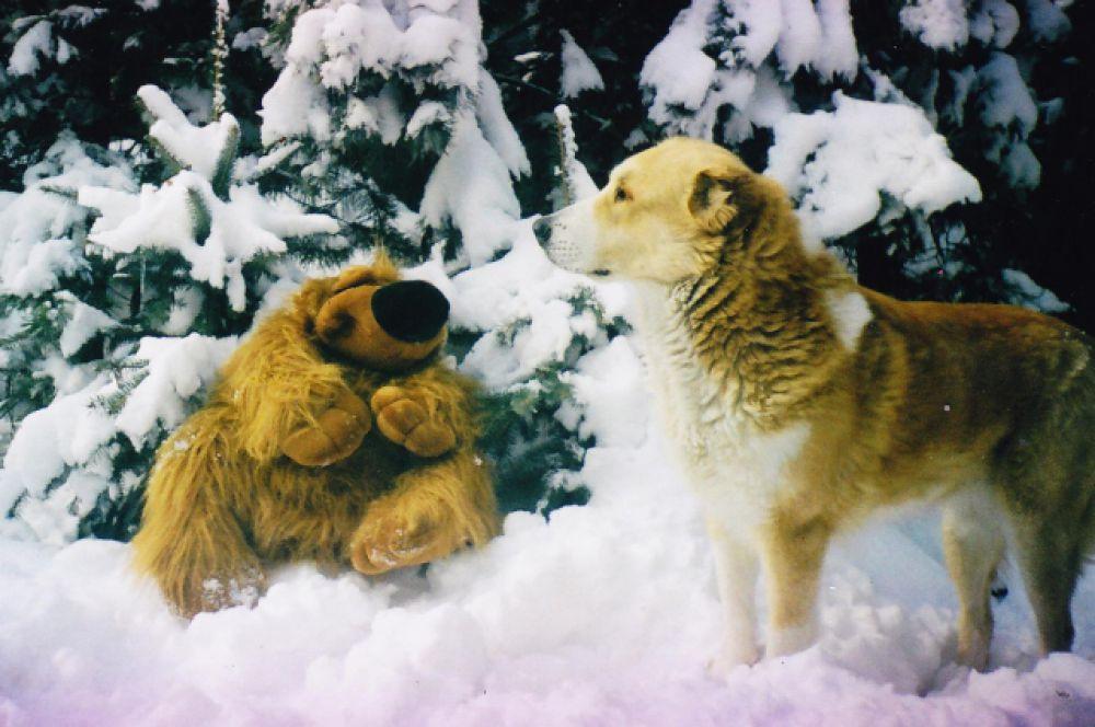 Урсула - третья любимица Марии Юрченко - одинаково любит две вещи: снег и мягкие игрушки.