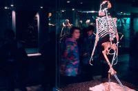 Люси, реконструкция. Зенкенбергский музей, Германия.