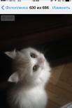 У самой Стэфи котят никогда не было, но она с удовольствием нянчит щенят Лойды - еще одной питомицы Ольги Демченко.