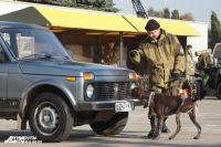 Служебные собаки помогают в поиске взрывчатки.