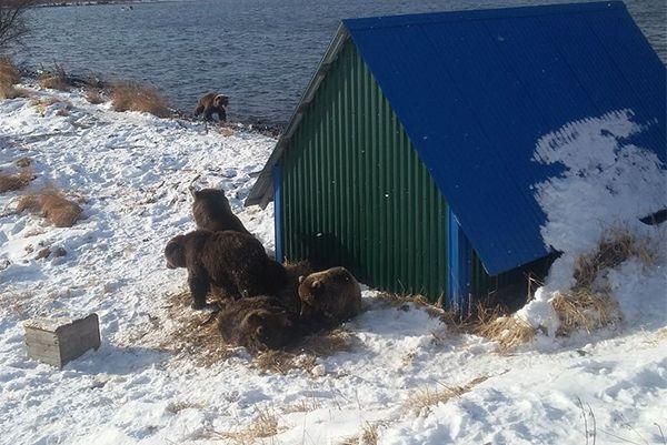 Когда дует западный ветер, звери прячутся за лодочным гаражом, там же греются на солнце.