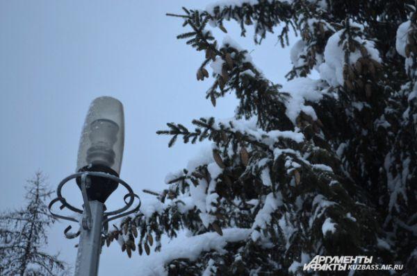 Шишки, соседствующие с уличными фонарями, удивительно дополняли атмосферу нетронутого леса.