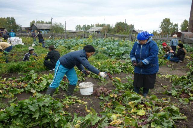 Зарплаты сельских работников растут.