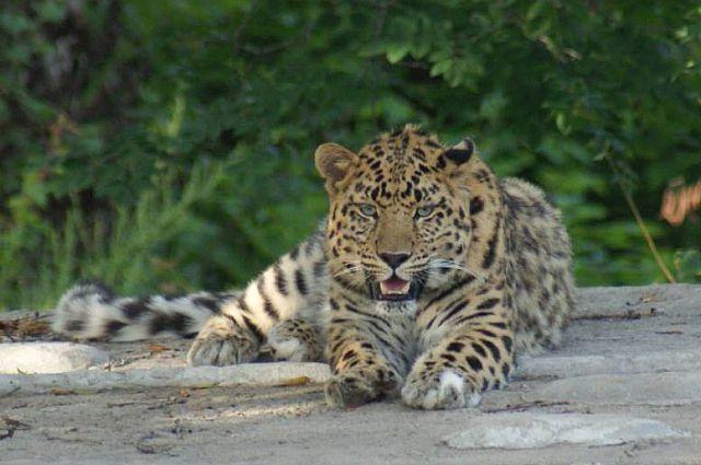 Жизнь на «Земле леопарда» продолжается, и на смену прежних героев приходят новые.