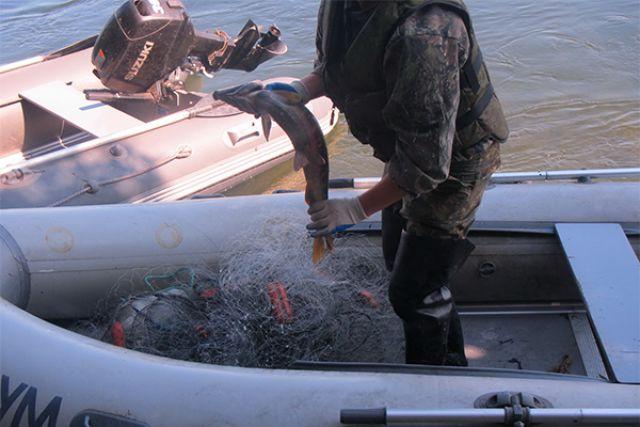 У браконьеров быстрые лодки и мощные моторы.