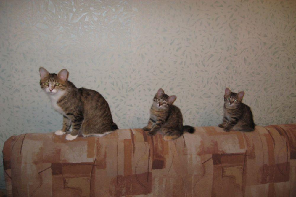 Участники №19 - кошка Бася с котятами