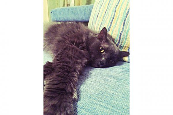 Участник №3 - кот Жан