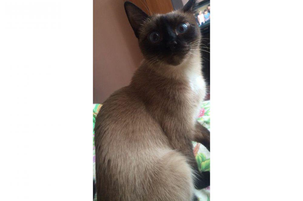 Участница №18 - кошка Сима