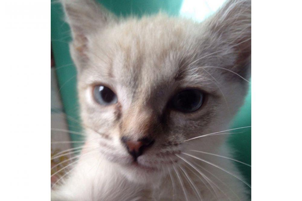 Участница №8 - котёнок Аришка