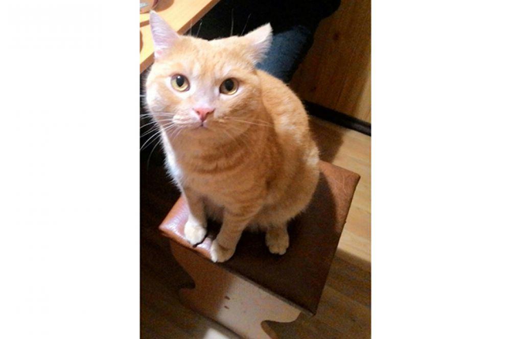 Участник №7 - кот Леонтий