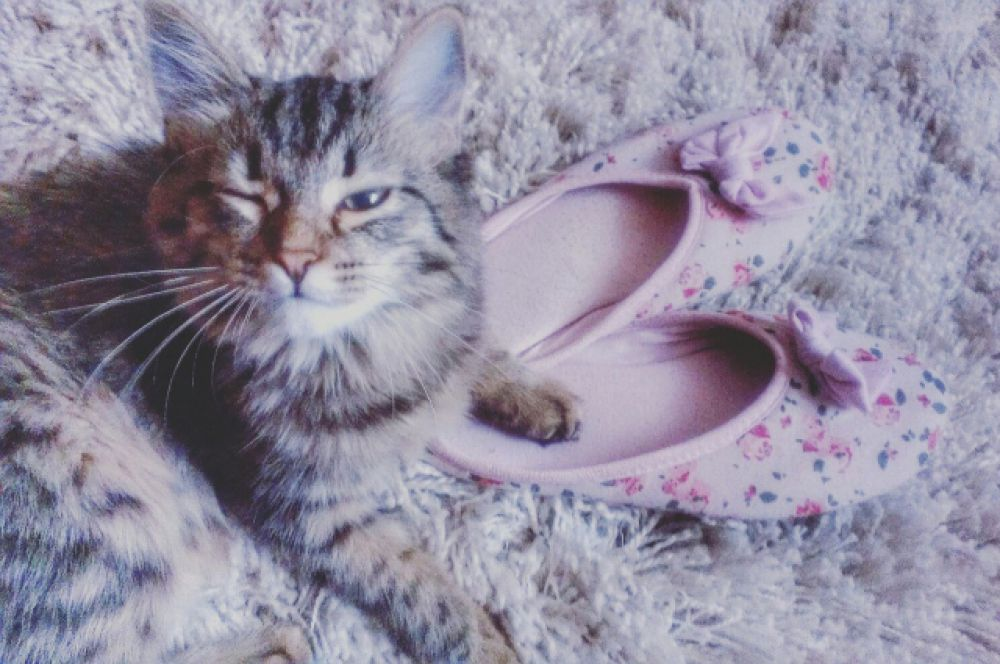 Участница №13 - кошка Клер