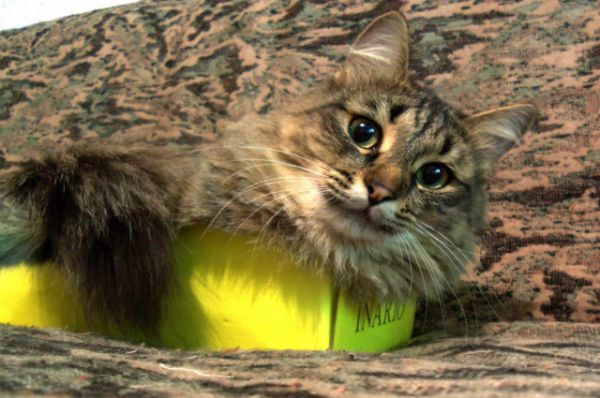 Участник №22 - кот Федот
