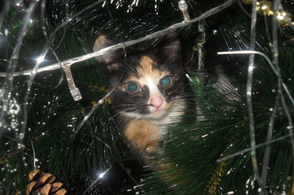 Участник №21 - кошка Бусинка
