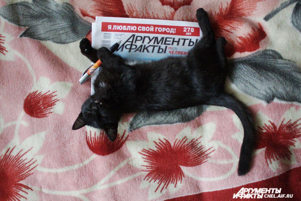 кот Магистр