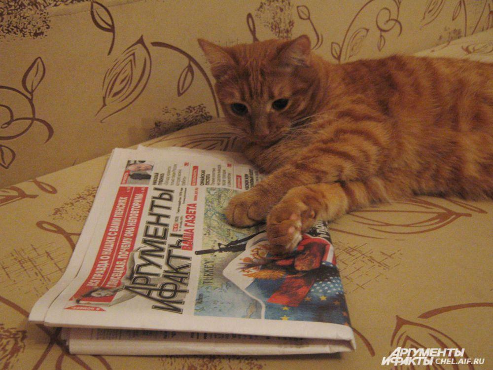 кот Рыжик
