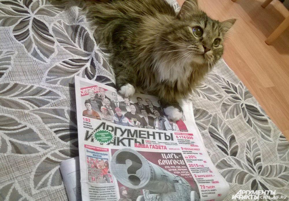 кот Тюбик