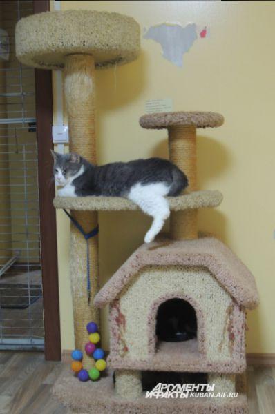 Это «кошкин дом» - отдельное помещение, где в условиях, максимально приближенных к домашним, содержаться вылеченные животные.