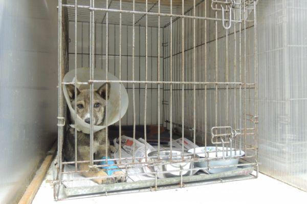 Собака проходит курс послеоперационной реабилитации.