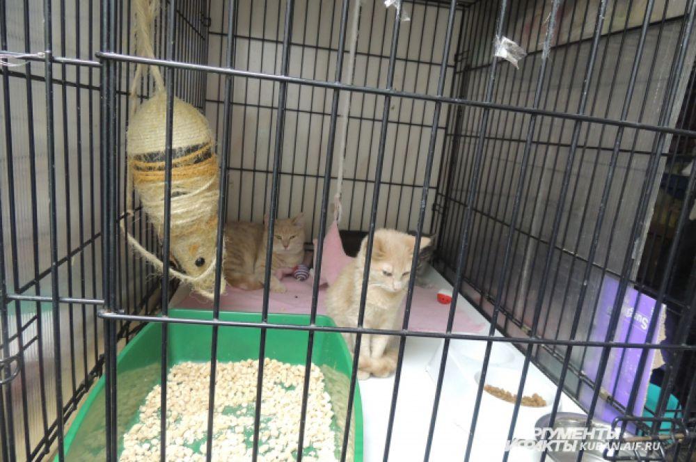Эти кошки уже выздоровели, теперь осталось найти им хозяев.
