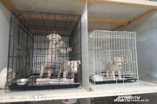 Эти щенки всего несколько дней находятся на ветеринарном обследовании в приюте.