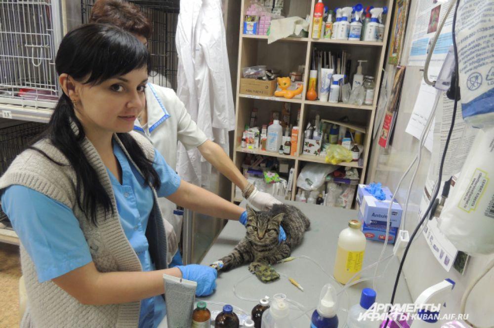 При приюте «Краснодог» открыт ветеринарный кабинет, в котором обслуживаются как приютские коты и собаки, так и домашние животные.