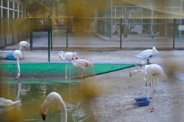 Фламинго в парке имени Октябрьской революции