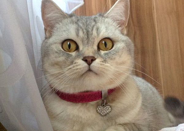Кот из Балаково.