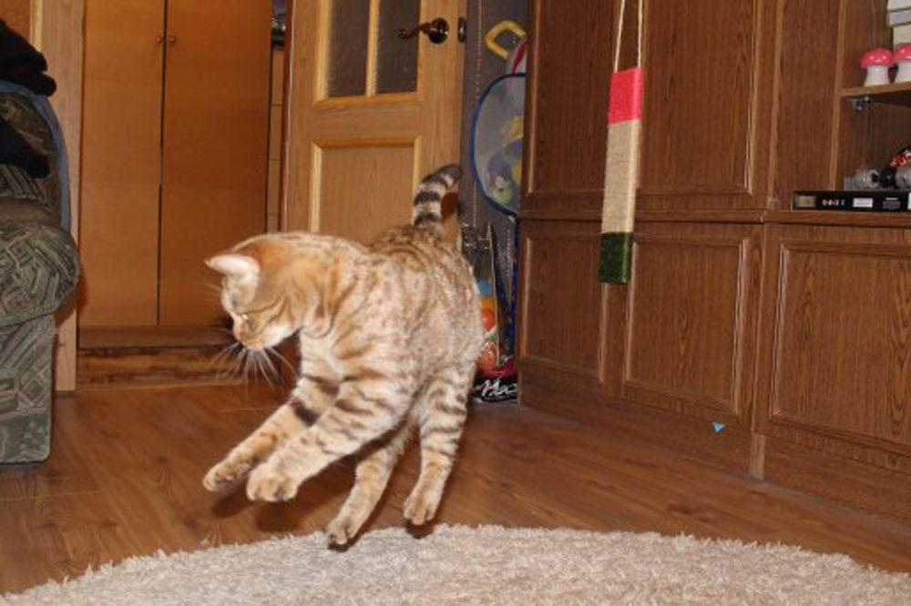 Кот из Волгограда.