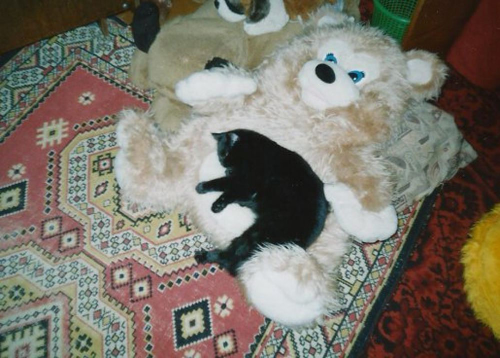 Кот из Самары.