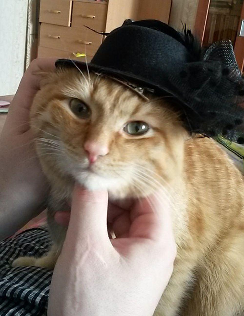 Кот из Тюмени.