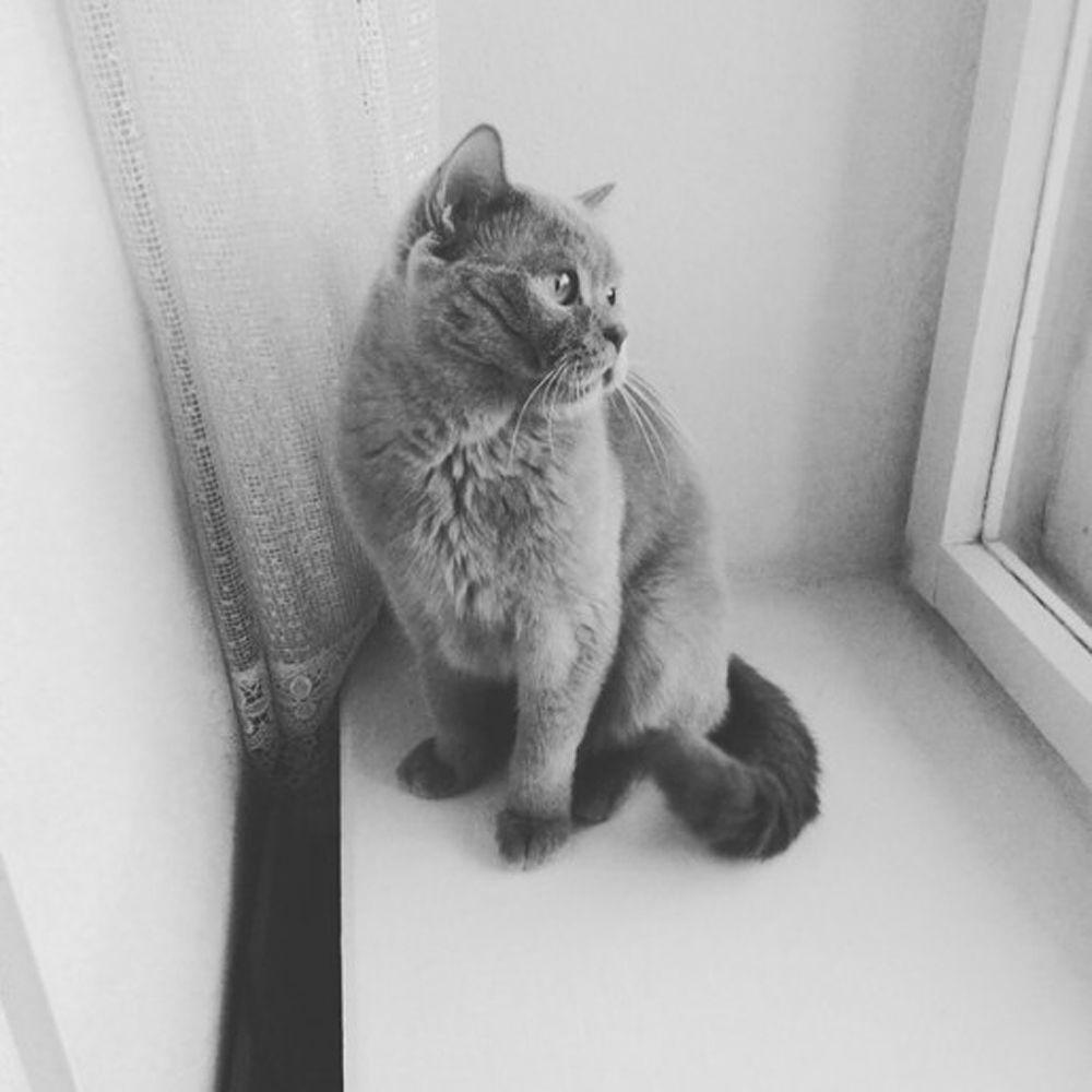 Кот из Ярославля.