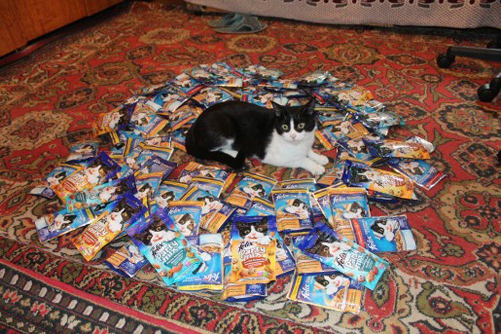 Кот из Хабаровска.