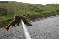 Рыбный день.