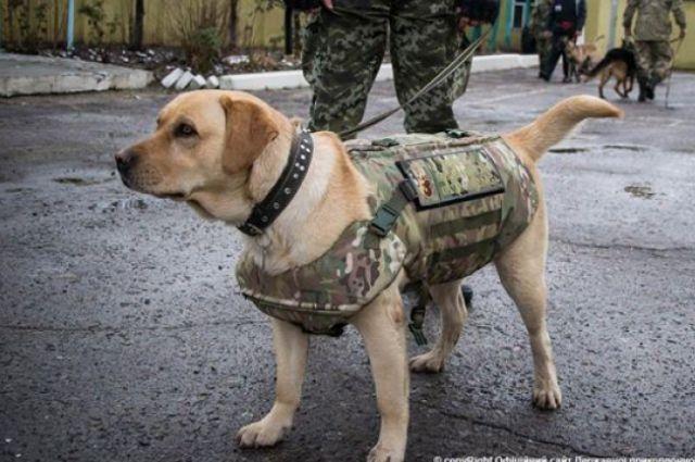 собаки в бронижилетах