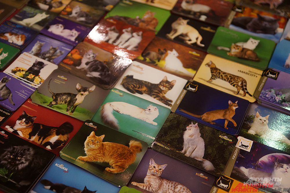 Магниты с кошками.