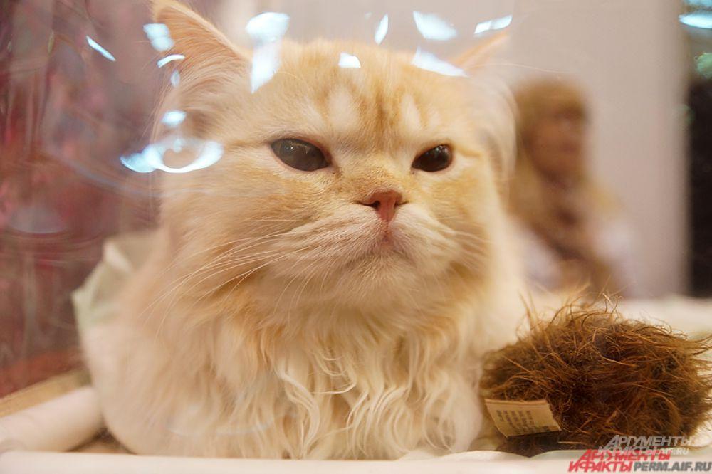 Международная выставка кошек открылась в субботу, 5 декабря.