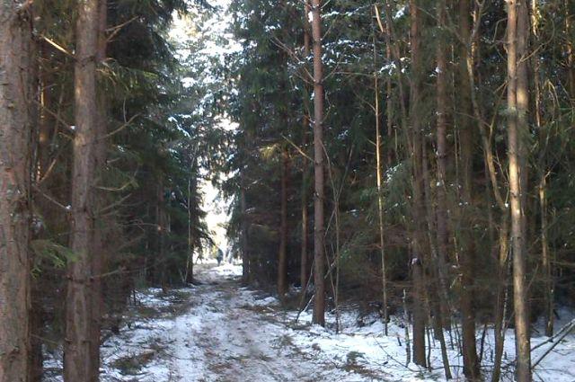 Леса необходимо прореживать.