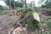 По итогам проверок государственные лесные инспекторы направили в следственные органы 261 материал.